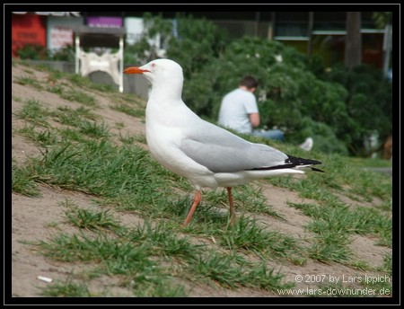 Vögel vor der Bibliothek Melbournes