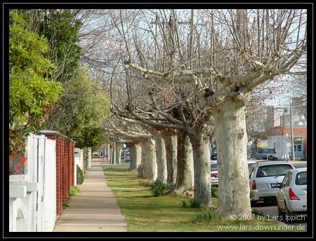 Baumreihe in der Corio Street