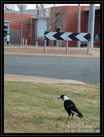 Vogel vor Kreisverkehr
