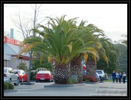 australische Pflanzen in den Straßen