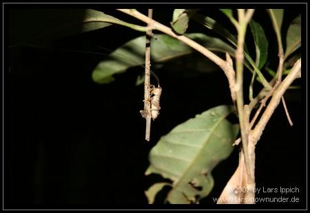die Tierwelt im Regenwald