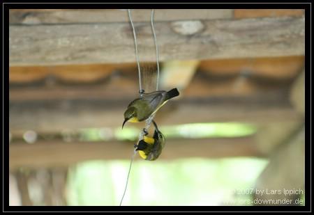 Vögel im Wartebereich zum Speerwerfen